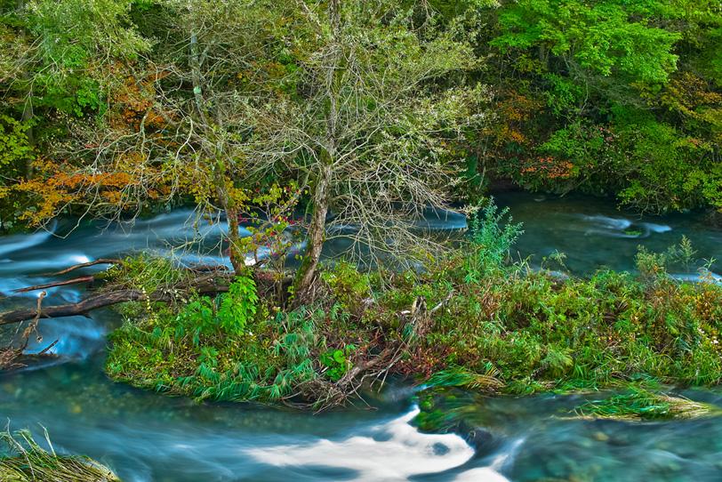 色鮮やかな木々に囲まれた清流の写真画像