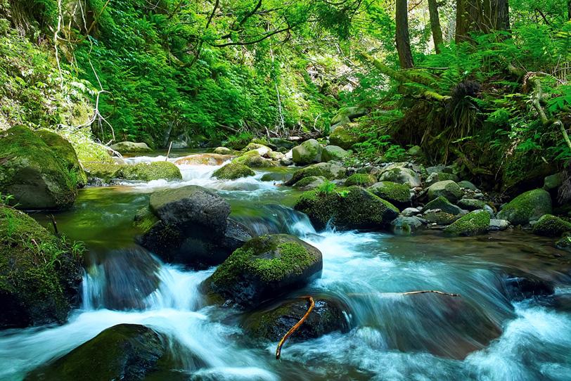 新緑の季節の渓流の写真画像