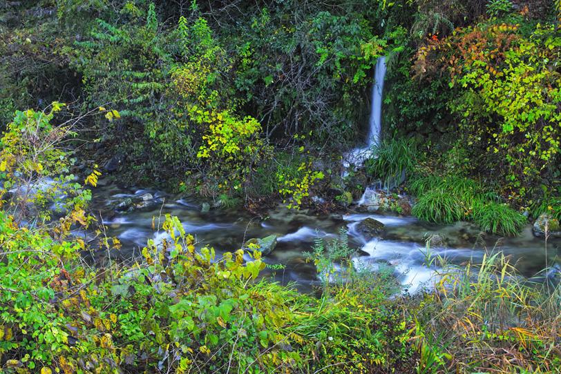 色鮮やかな木々の間を流れる川の写真画像