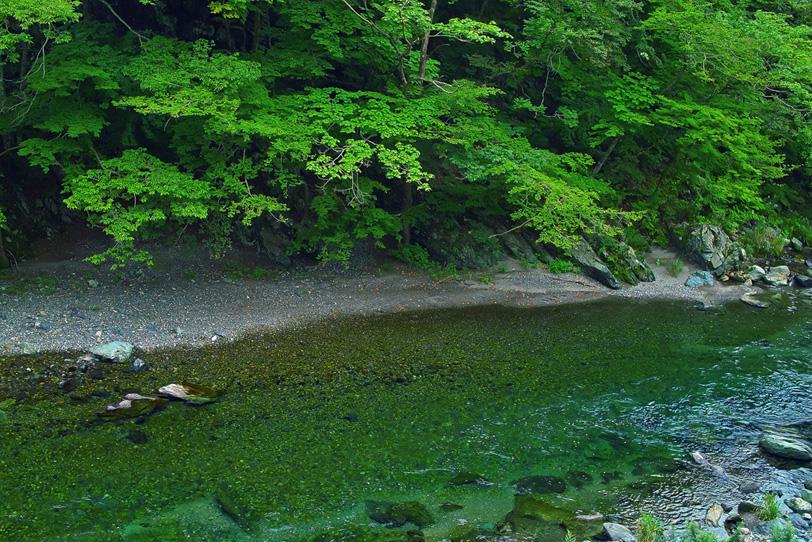 緑濃き穏やか川瀬の写真画像