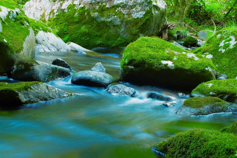 緑の苔が映える美しい渓流の写真画像