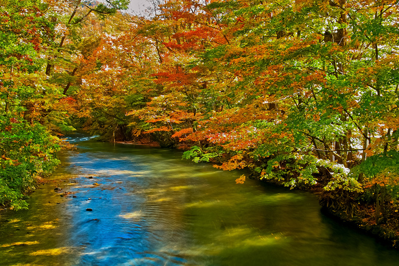 紅葉美しい秋の奥入瀬渓流の写真画像