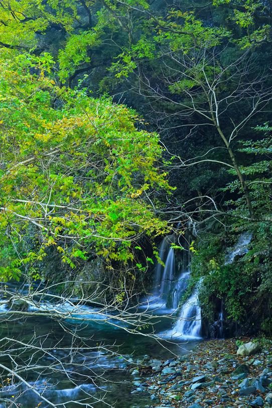 四季の川の写真画像