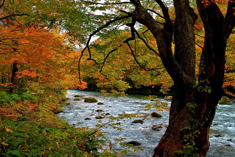 綺麗な川の写真画像