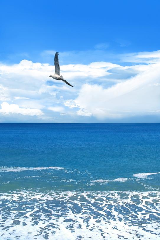 「カモメと真夏の海」の素材を無料ダウンロード