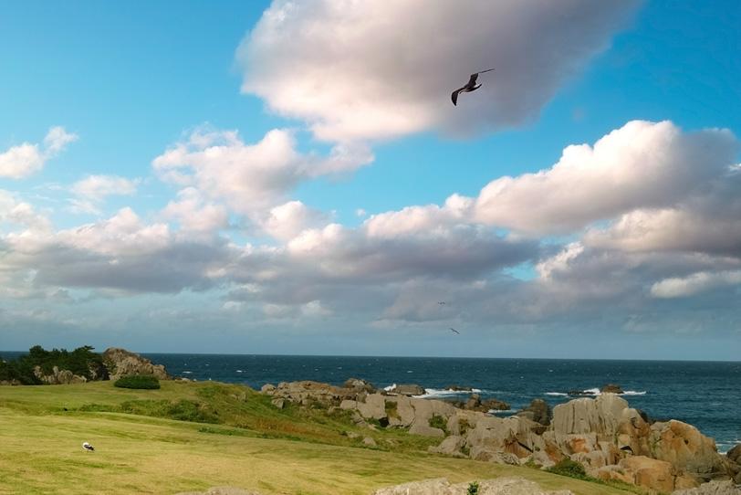 海猫のいる岩の多い海岸の写真画像