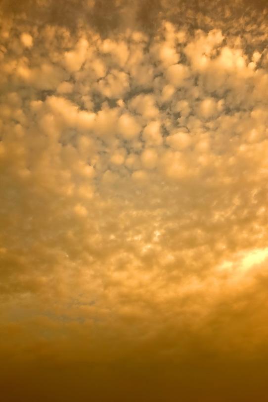 夕焼けに染まる金色の羊雲の写真画像