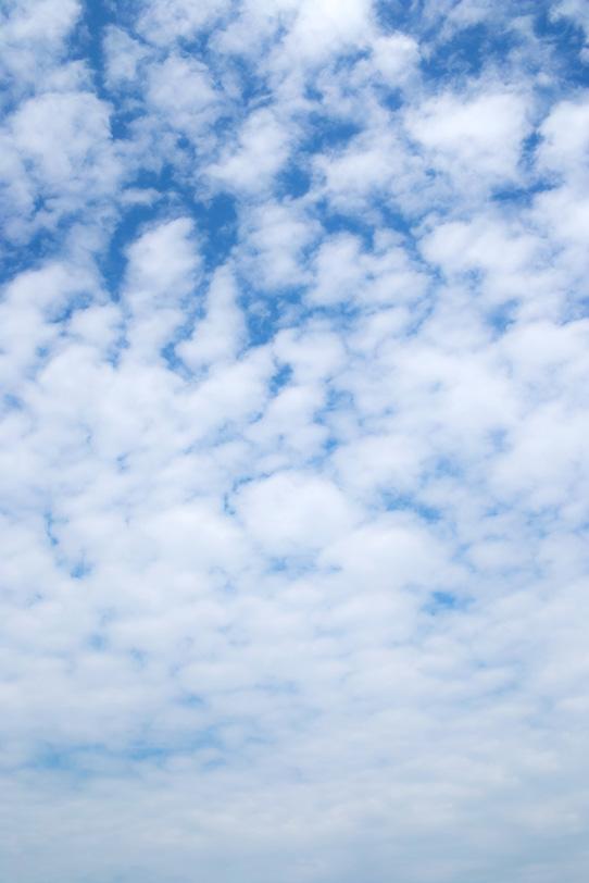 青空高く覆うひつじ雲の写真画像