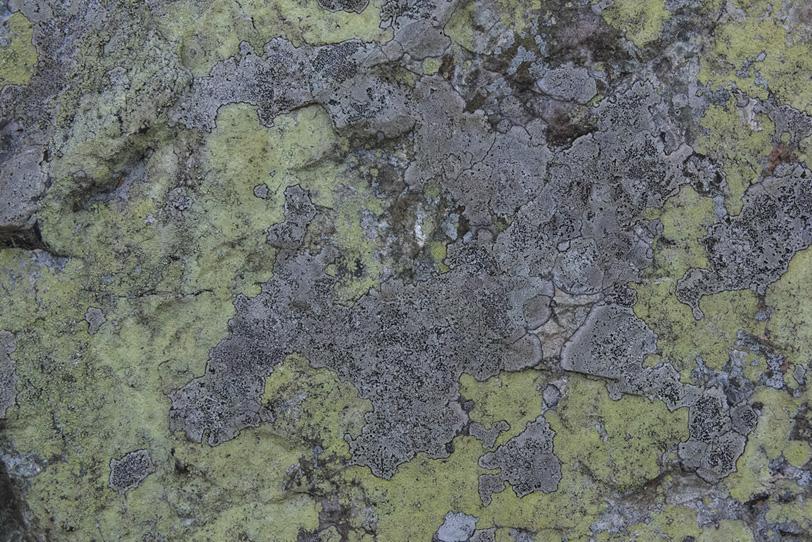 有機的模様の石の背景の写真画像