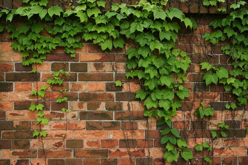 レンガの壁を伝う葉の写真画像