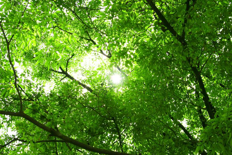 日が差し込む緑の木立の写真画像