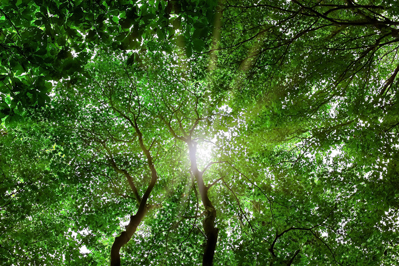見上げる木の隙間から浴びる光の写真画像