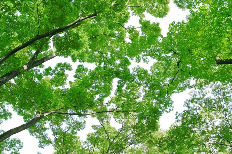 沢山の緑の葉とつけた枝の写真画像