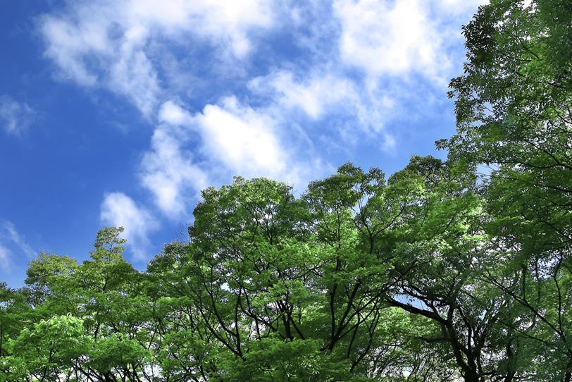 青空と緑のコントラストの写真画像