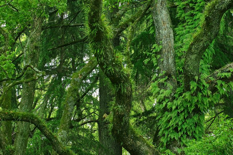 鬱蒼とした草木生える樹海の写真画像