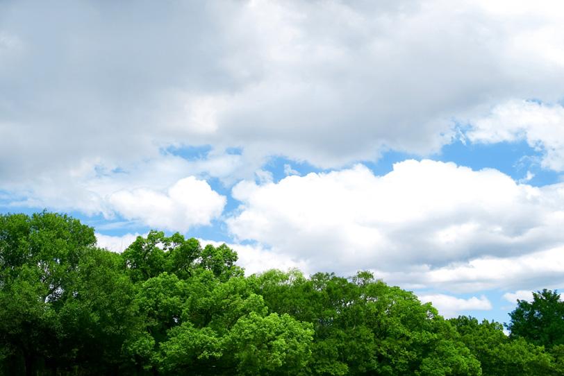 樹木の写真画像