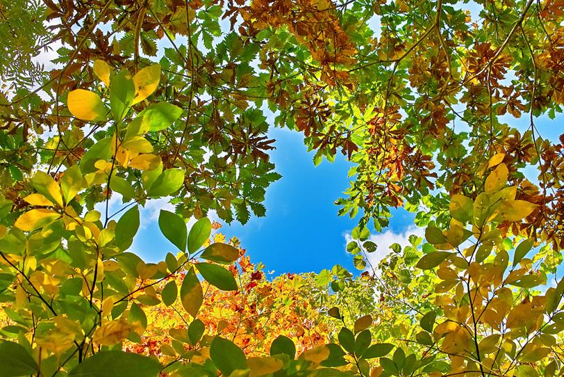 色鮮やかな葉っぱのフレームの写真画像