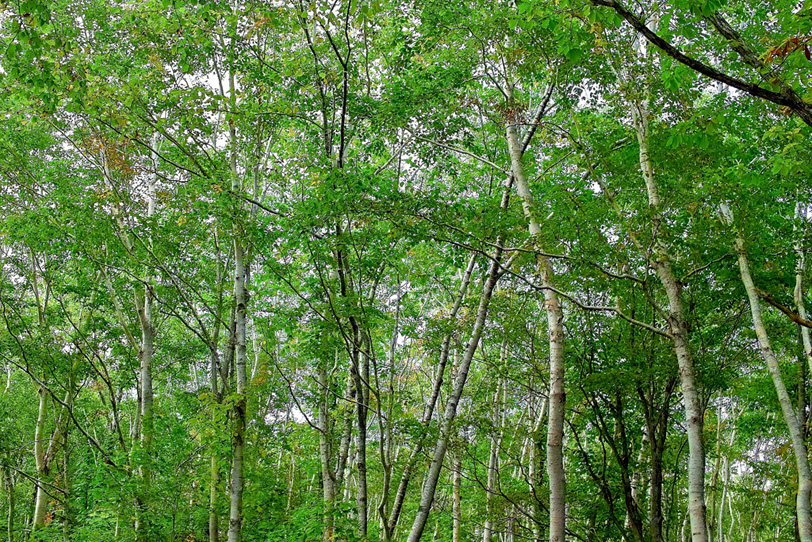 林の写真画像