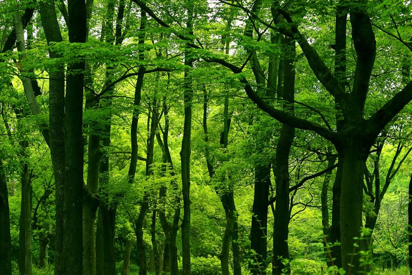 光浴びる鮮やかな緑と幹のコントラストの写真画像