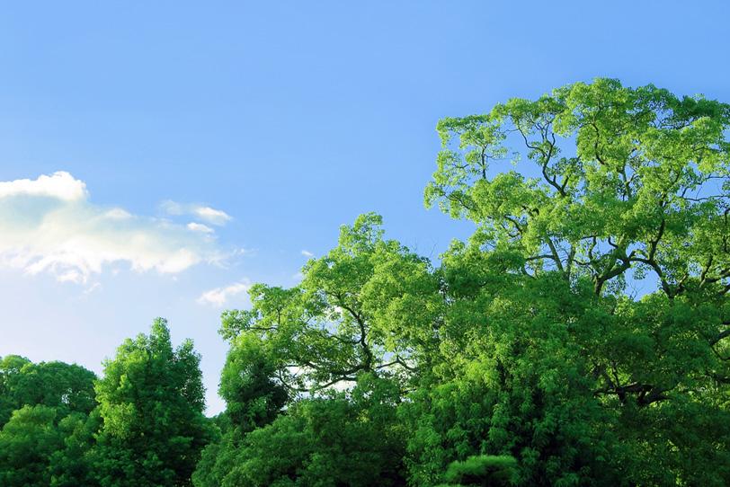 朝の光を受ける緑の木立の写真画像