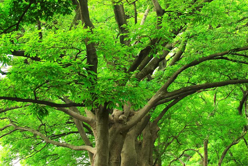 四方に太い枝を延ばす木の写真画像