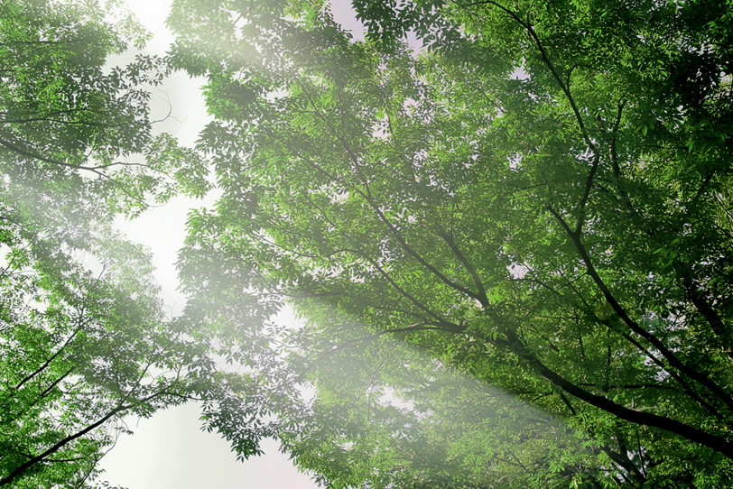 爽やかな朝日を浴びる森林の写真画像