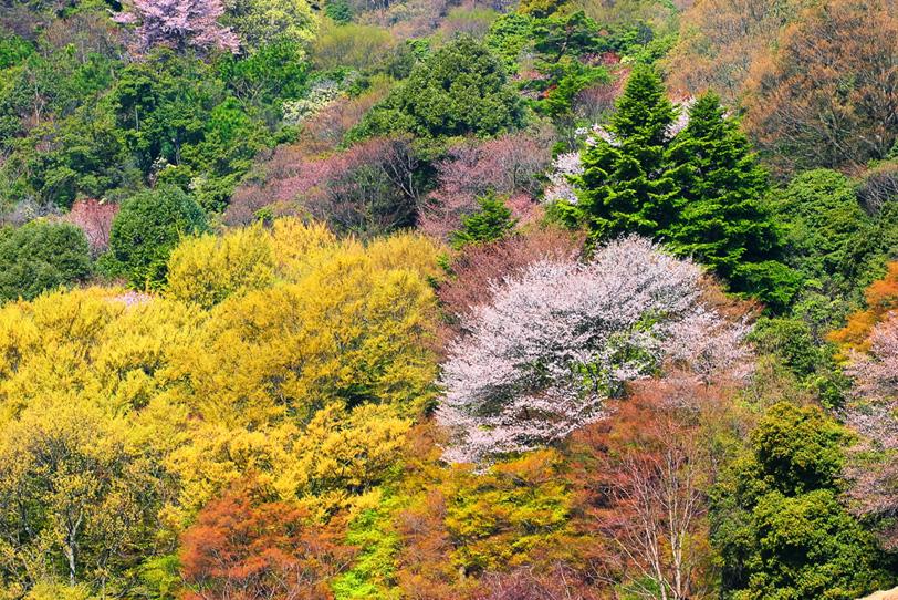 色彩のハーモニーを奏でる春の山の写真画像