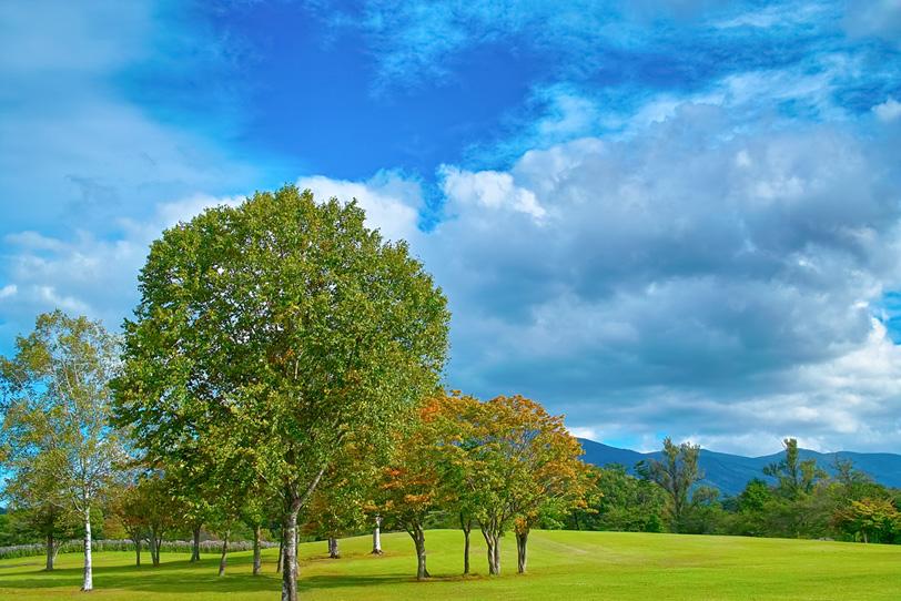 緑の丘の小さな木立の写真画像