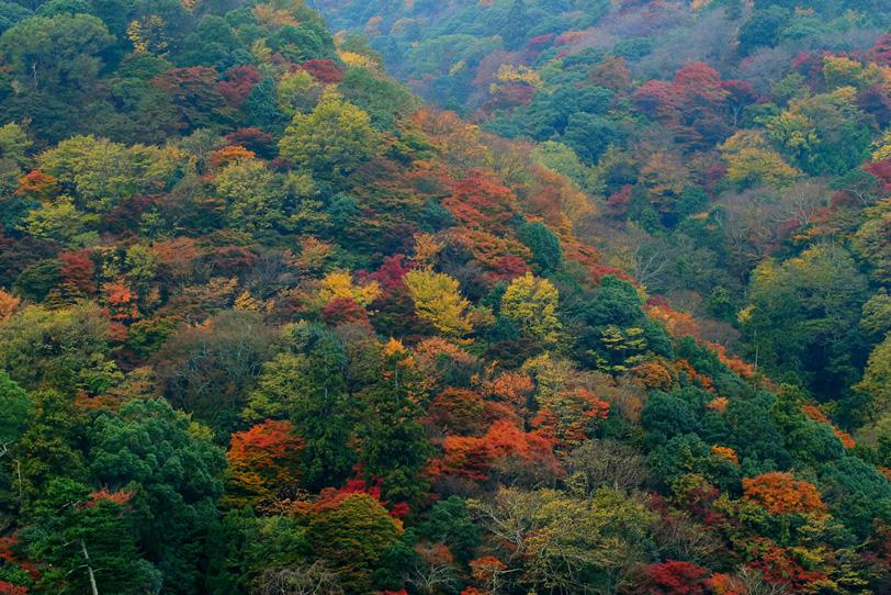 賑やかに色づく秋の山の写真画像