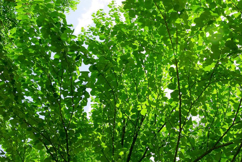 光に輝く緑の葉の写真画像