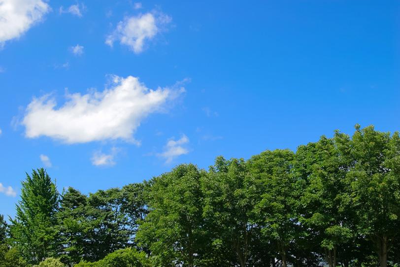 青空と濃い緑の木々の写真画像