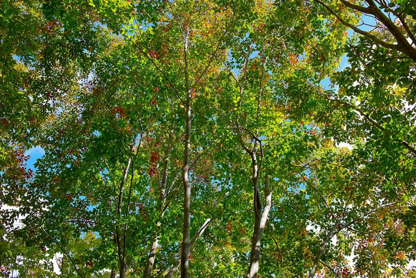 初秋の木漏れ日の写真画像