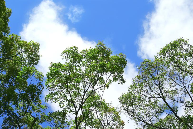 青空と緑の葉の樹木の写真画像