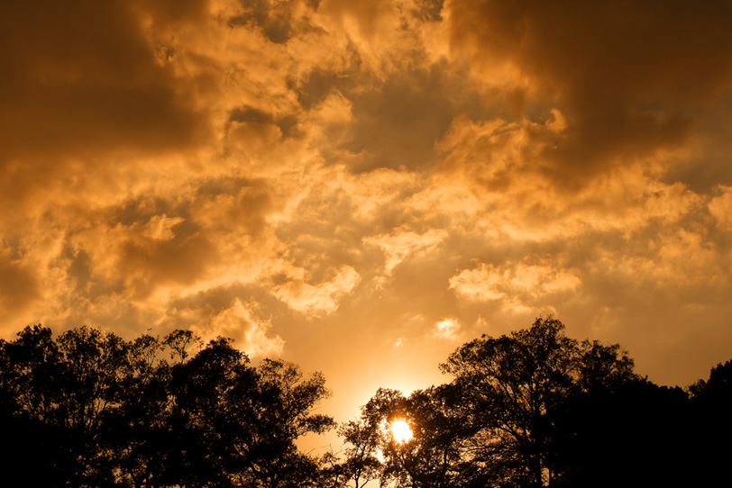 夕焼けと木々のシルエットの写真画像