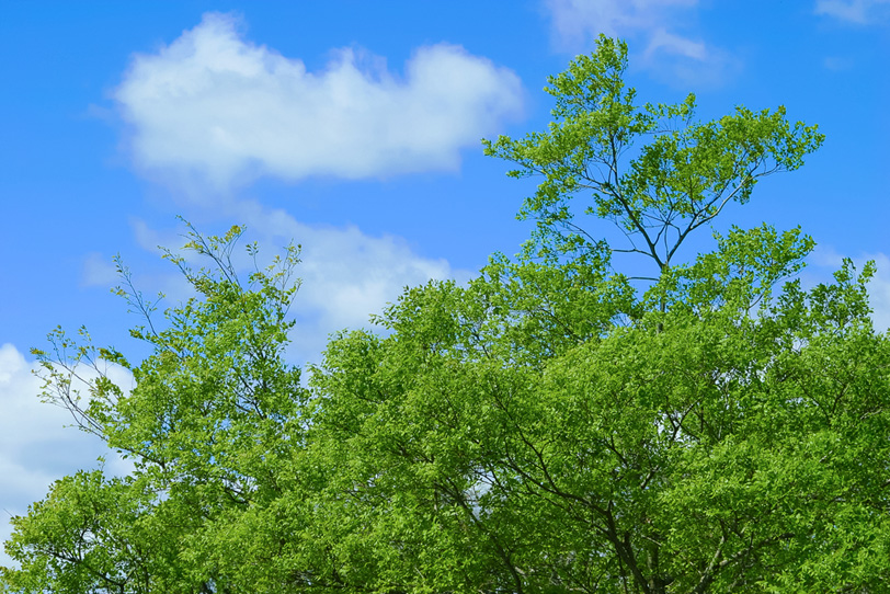 爽やかな風が吹く初夏の林の写真画像