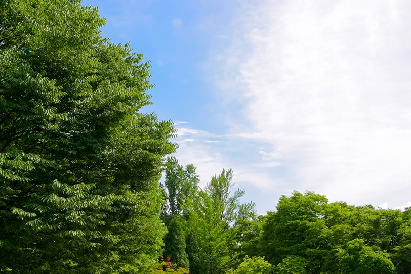 連なる木々の向こうの青空の写真画像