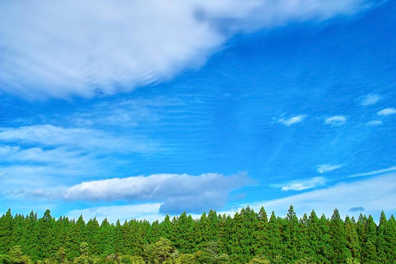 杉林の上に広がる大空の写真画像