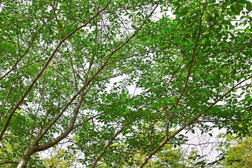 白い背景の木の枝の写真画像