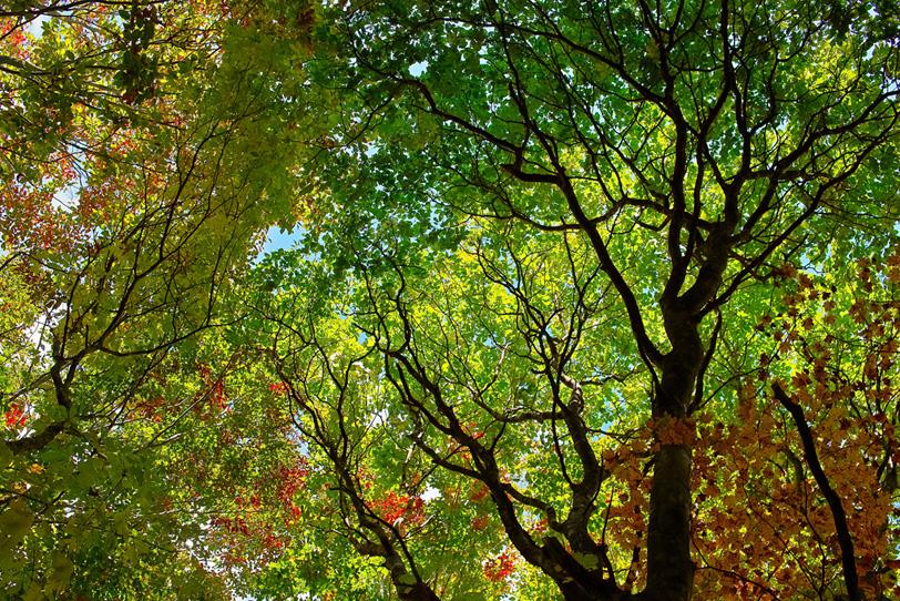 日光で輝く秋の森の写真画像