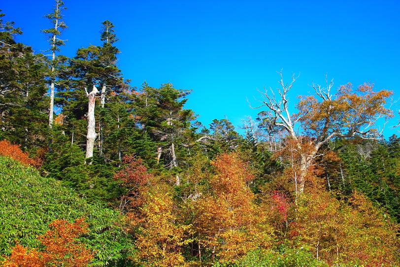 青空の下の黄葉した木の写真画像