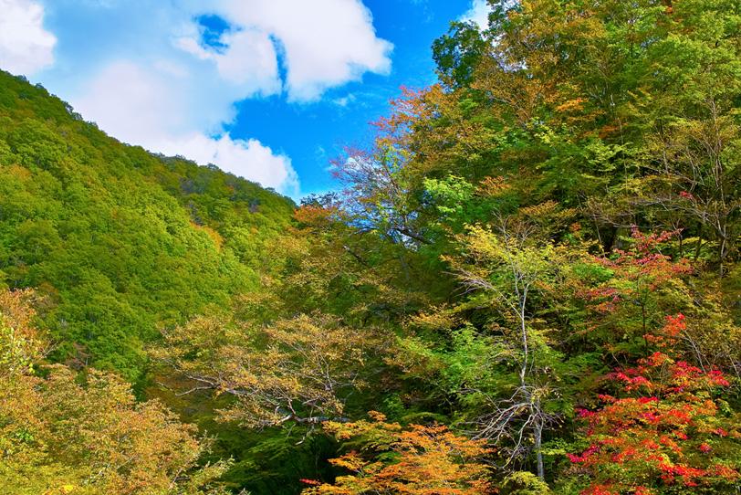 紅葉が始まる秋の山の写真画像
