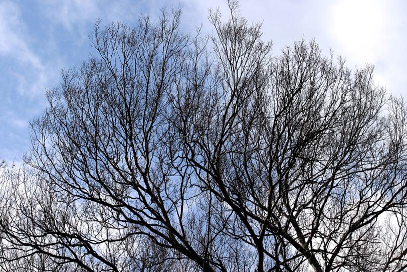 逆光のシルエットが美しい冬の樹の写真画像