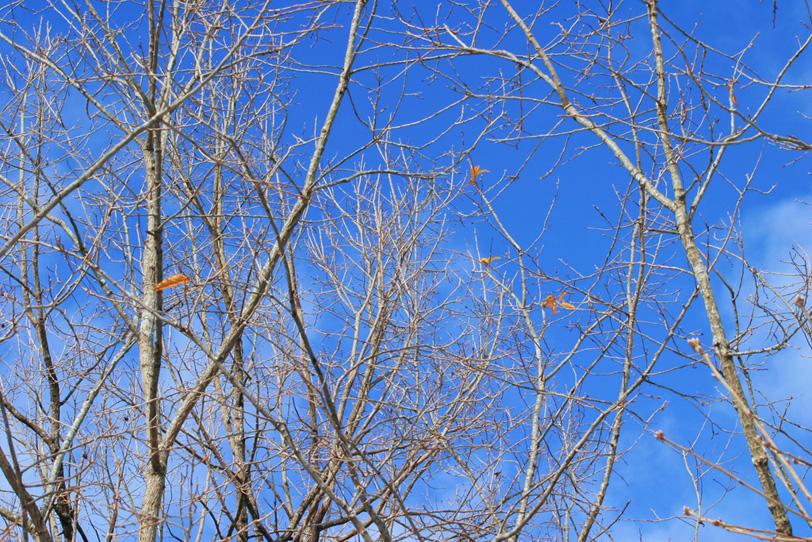 冬の始めに僅かに葉を残す樹木の写真画像
