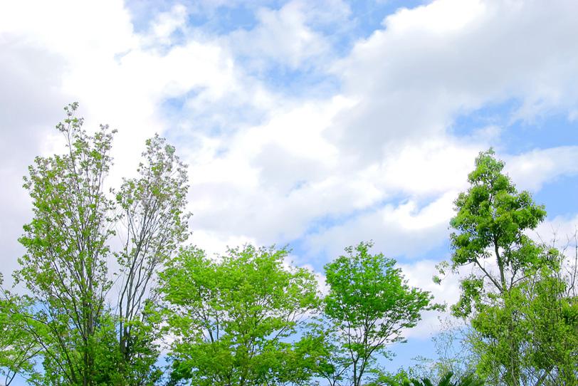 空の下の木立の写真画像