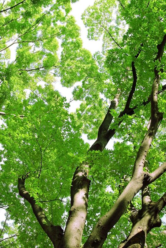 木・樹木の写真画像