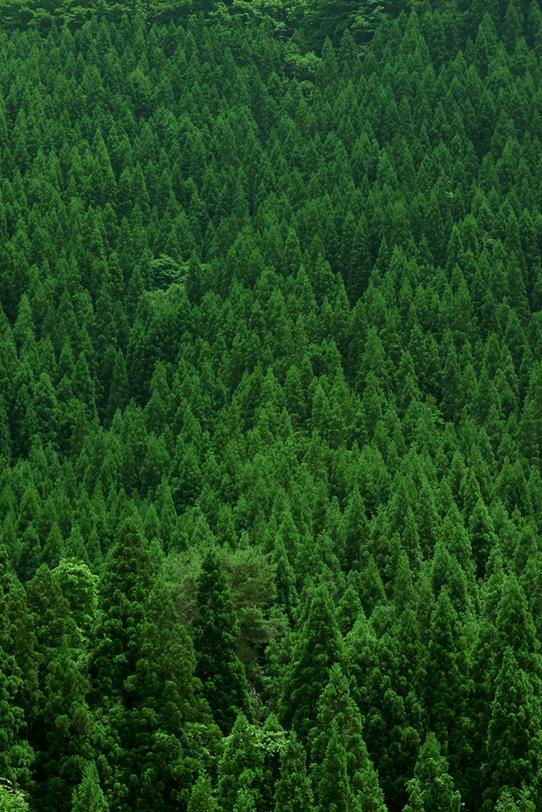 四季の樹木の写真画像