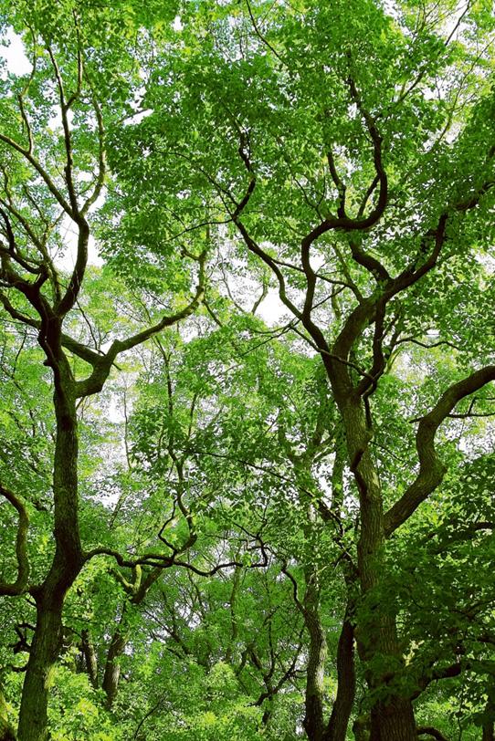 森林の写真画像
