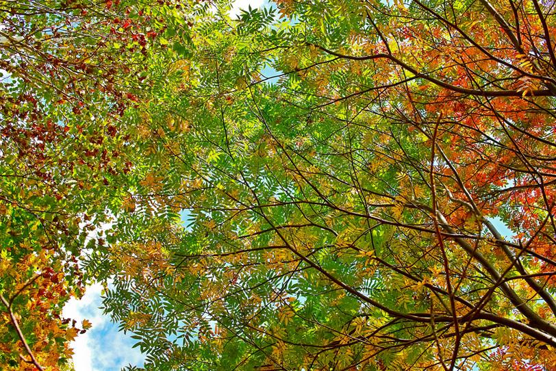 季節の木々の写真画像