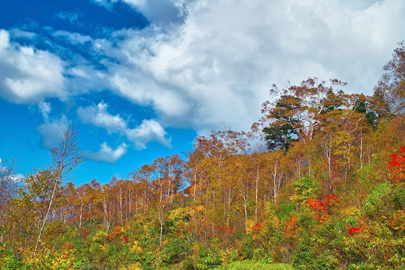 木と山のイメージの写真画像