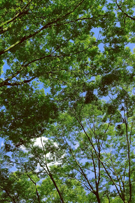 緑と紅葉の木々の写真画像